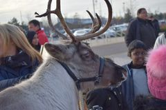 伦敦英国02/12/2017 游人和鹿 库存照片