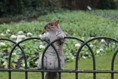 伦敦野生生物 免版税库存图片