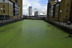 伦敦金丝雀码头2017年9月12日 在大厦之间的绿色水 库存照片