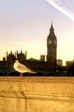 伦敦鸽子 库存图片