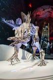 伦敦,英国,自然历史博物馆-最完全的剑龙 免版税库存照片