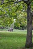 伦敦,英国, 2018年9月26日, A人在海德Pa坐一条长凳 免版税库存照片