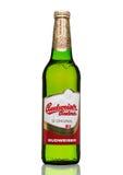 伦敦,英国- 2017年3月30日:瓶在白色,其中一的百威Budvar啤酒最高的销售的啤酒在捷克 库存照片