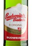 伦敦,英国- 2017年3月30日:装瓶labelof在白色,其中一的百威Budvar啤酒在捷克Republ的最高的销售的啤酒 免版税图库摄影