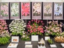 伦敦,英国- 2017年5月25日:RHS切尔西花展2017年 库存照片