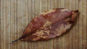 伪装秋天叶子和竹子 退伍军人 免版税库存照片