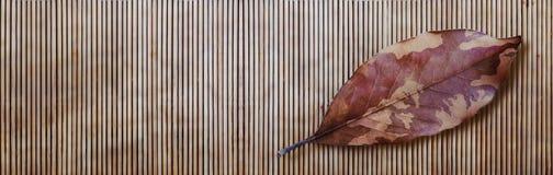 伪装秋天叶子和竹子 免版税库存照片