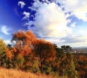 伯利・格里芬湖岸秋季风景  库存照片