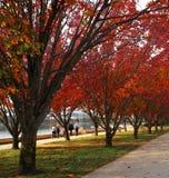 伯利・格里芬湖秋季风景  库存图片
