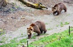 伯尔尼熊坑和熊 免版税库存照片