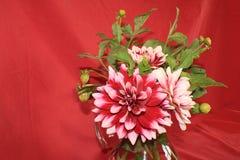 伯根地和白色大丽花开花和在一个玻璃投手安排的叶子 库存照片