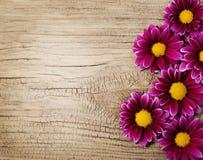 伯根地在木背景的菊花花 免版税库存照片