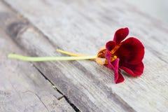 伯根地老木表面上的金莲花花在庭院里 库存照片