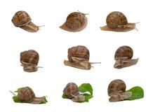 伯根地酒拼贴画蜗牛 库存图片
