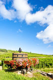 伯根地酒法国葡萄园 库存照片