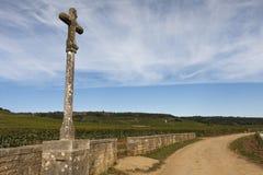 伯根地酒的,法国葡萄园 免版税库存照片