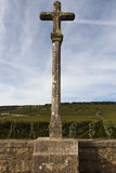 伯根地酒的,法国葡萄园 库存照片