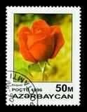 伯根地,玫瑰serie,大约1996年 库存图片