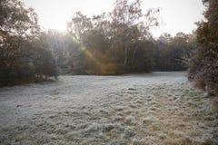 伯翰姆山毛榉,英国- 2016年11月7日:在伯翰姆山毛榉的冷淡的秋天风景在白金汉郡 免版税库存图片