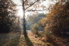 伯翰姆山毛榉,英国- 2016年11月7日:在伯翰姆山毛榉的冷淡的秋天风景在白金汉郡 免版税库存照片