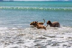 伴侣尾随享受他们的时间在海滩 免版税图库摄影