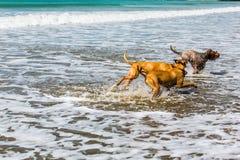 伴侣尾随享受他们的时间在海滩 免版税库存照片