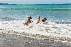 伴侣尾随享受他们的时间在海滩 库存图片