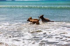 伴侣尾随享受他们的时间在海滩 库存照片