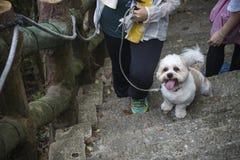 伸出他的舌头和走台阶的一条逗人喜爱的狗 他看非常激动和好奇对一切 免版税库存照片