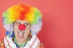 伸出舌头的资深男性小丑,当看在红色背景时 库存照片