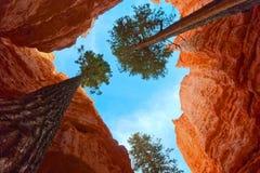 伸缩性生长结构树 库存图片
