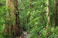 似亚马逊密林的一个风景看法 库存图片