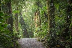 似亚马逊密林的一个风景看法 库存照片