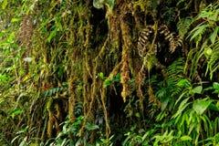似亚马逊密林 免版税库存照片
