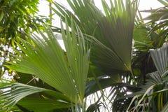似亚马逊雨林,国家公园Yasuni植物群 免版税库存照片