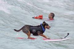 似犬海浪样式 库存照片