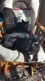 似猫的朋友为生活 免版税库存照片