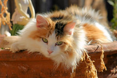 似猫的白棉布 免版税库存图片
