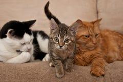 似猫的系列 库存照片