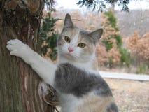 似猫的高 免版税库存照片
