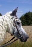 似马的表面 库存照片