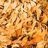 位于在地面上的批次干燥叶子 库存图片