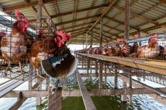 位于河的养鸡场 免版税库存图片
