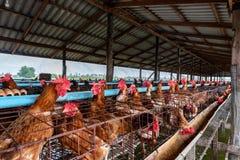 位于河的小养鸡场 库存照片