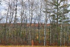 位于海沃德的林业,威斯康辛 免版税库存图片