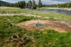 位于黄石国家公园的美好的象草的沼泽里面的地热温泉城 免版税库存图片