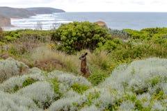 12位传道者,大洋路,维多利亚澳大利亚2017年10月 库存照片