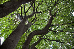 位结构树 库存照片
