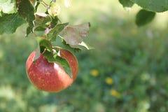 低停止的果子 库存照片