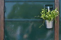 低劣的薄荷的植物 库存照片